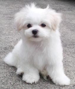 犬 写真.JPG